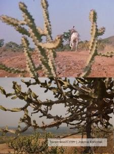 .... w tym tych roślinnych